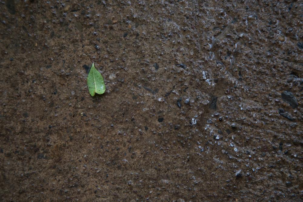 159 // 365 Little leaf