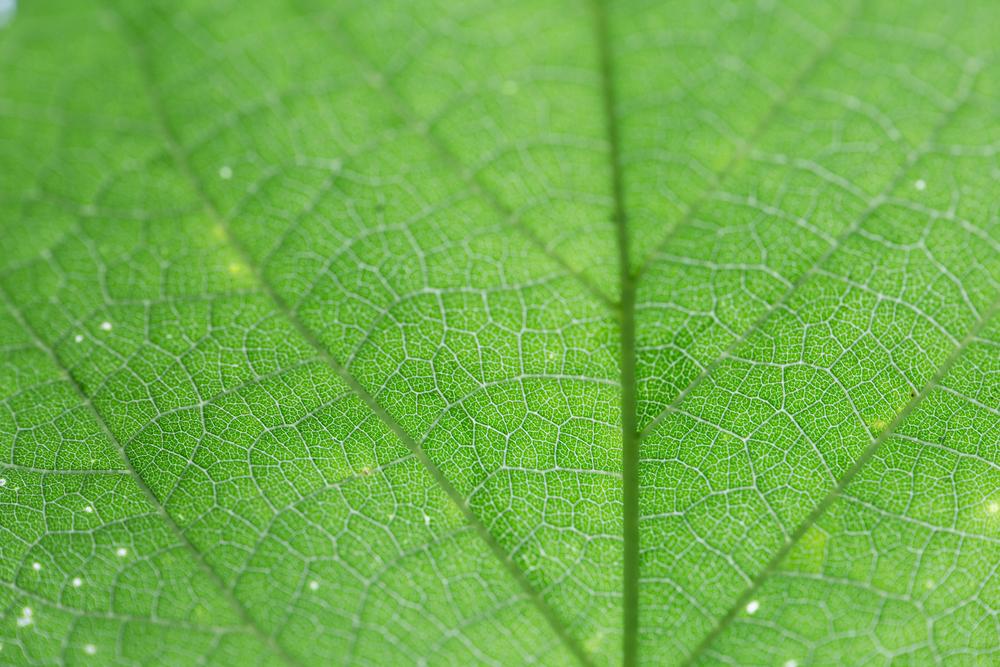 169 // 365 Sunny evening leaf