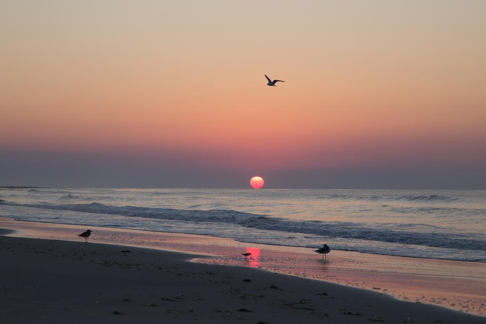 228 // 365 OCNJ sunrise