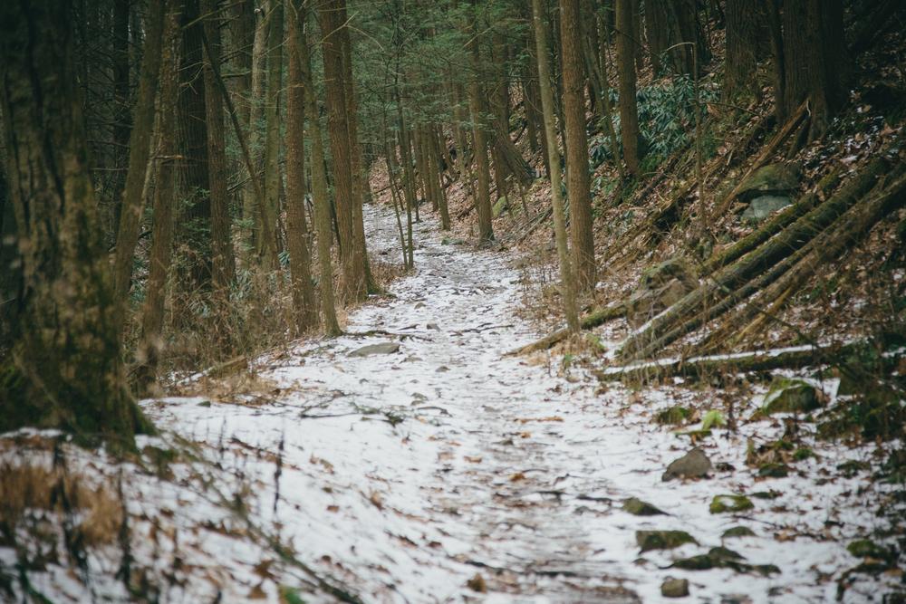 15 // 366 Rothrock hike