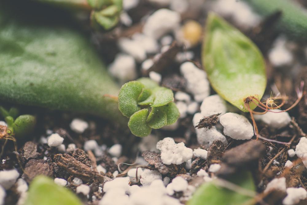 17 // 366 Propagation progress -Baby jade!