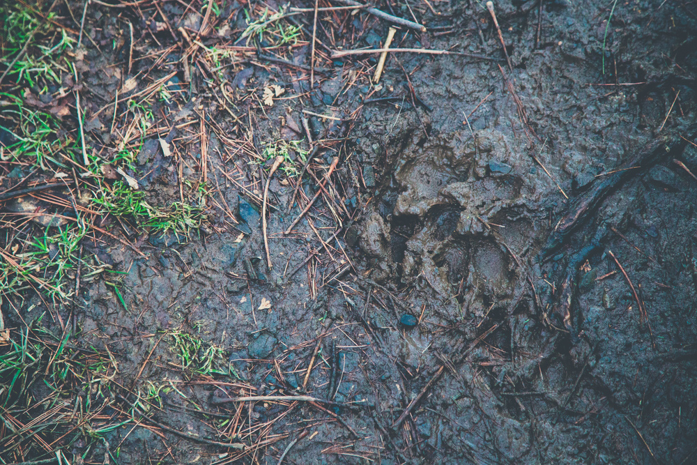 33 // 366 Muddy day hiking