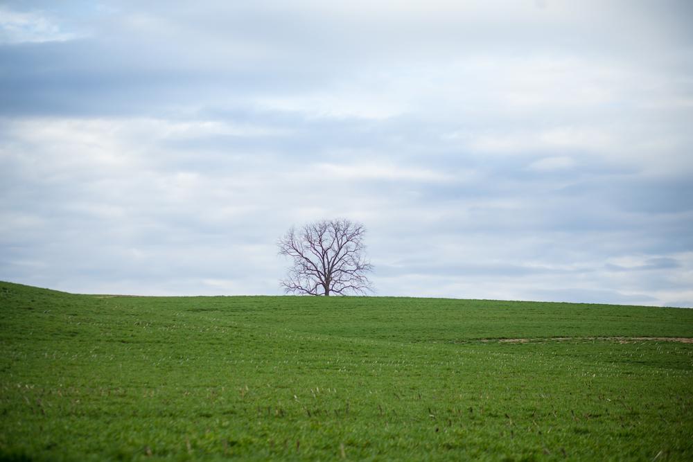 79 // 366 Lone tree
