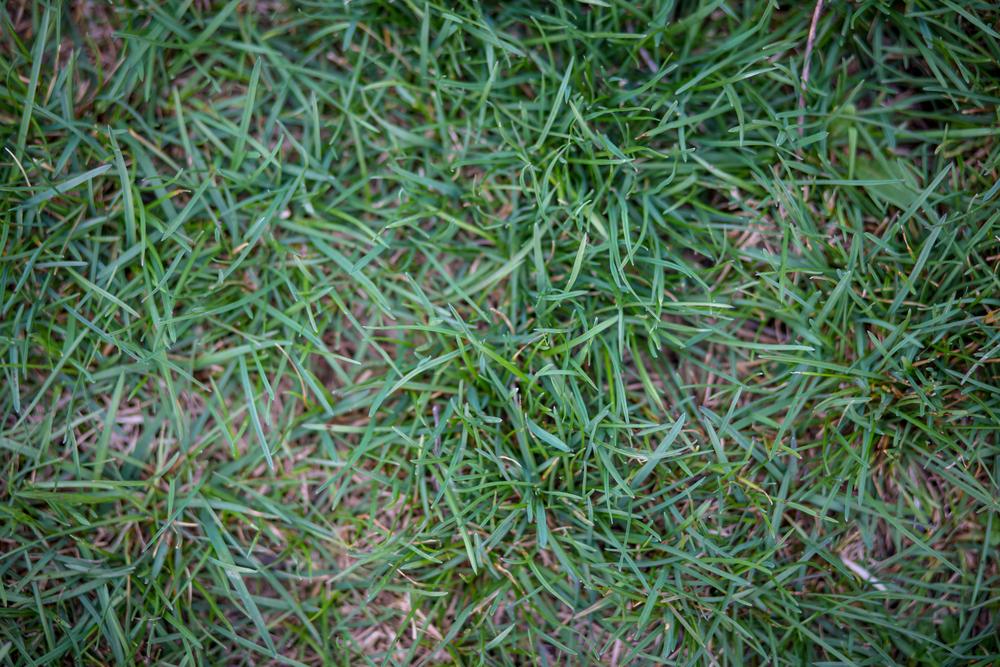 90 // 366 GREEN GRASS?!