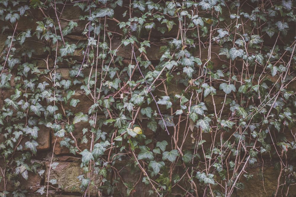 91 // 366 Mountain Road vines