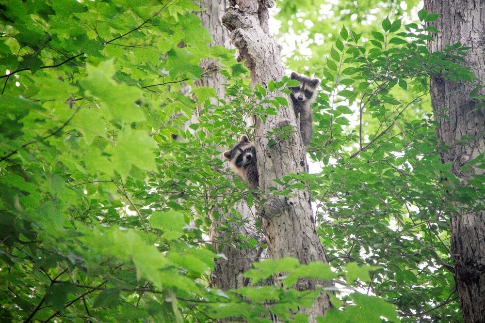 187 // 366 Came across these little guys in the state forest