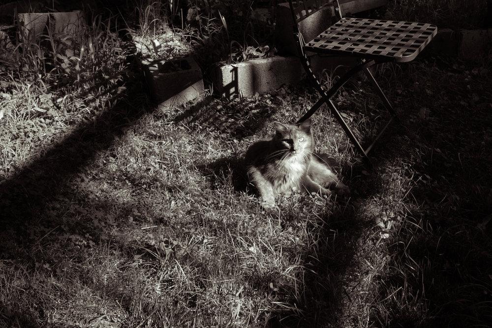 199 // 366 Sunny day Bob