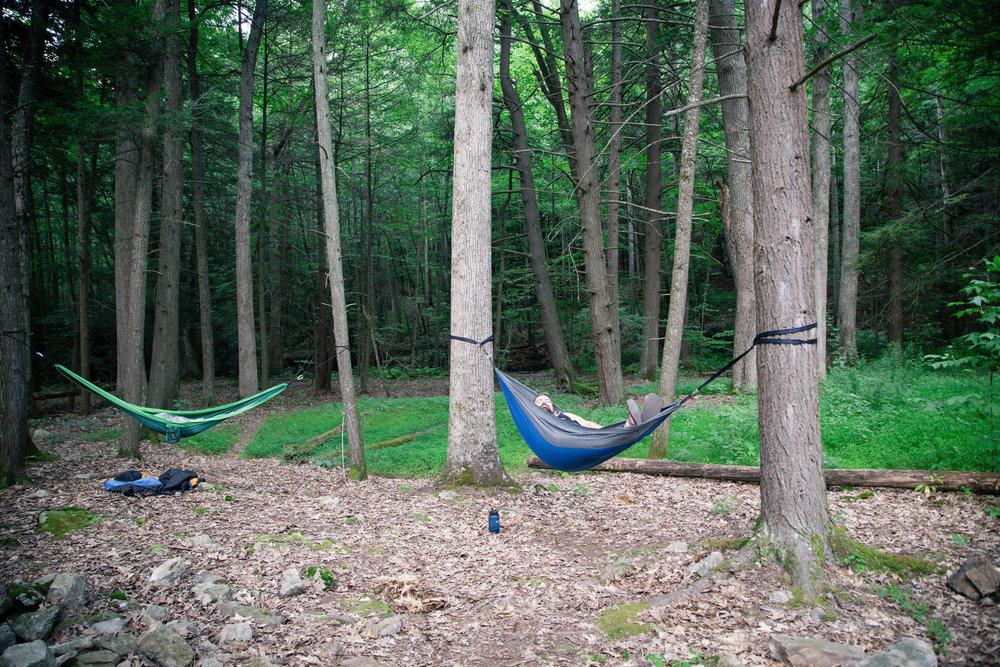 211 // 366 Husbear in a hammock