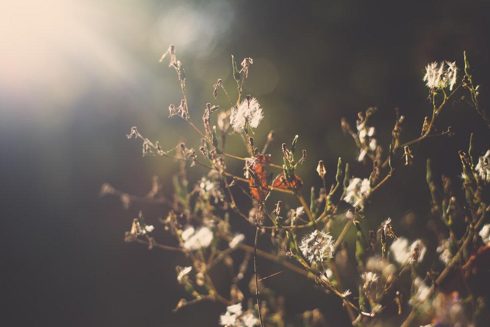 259 // 366 Late summer sun