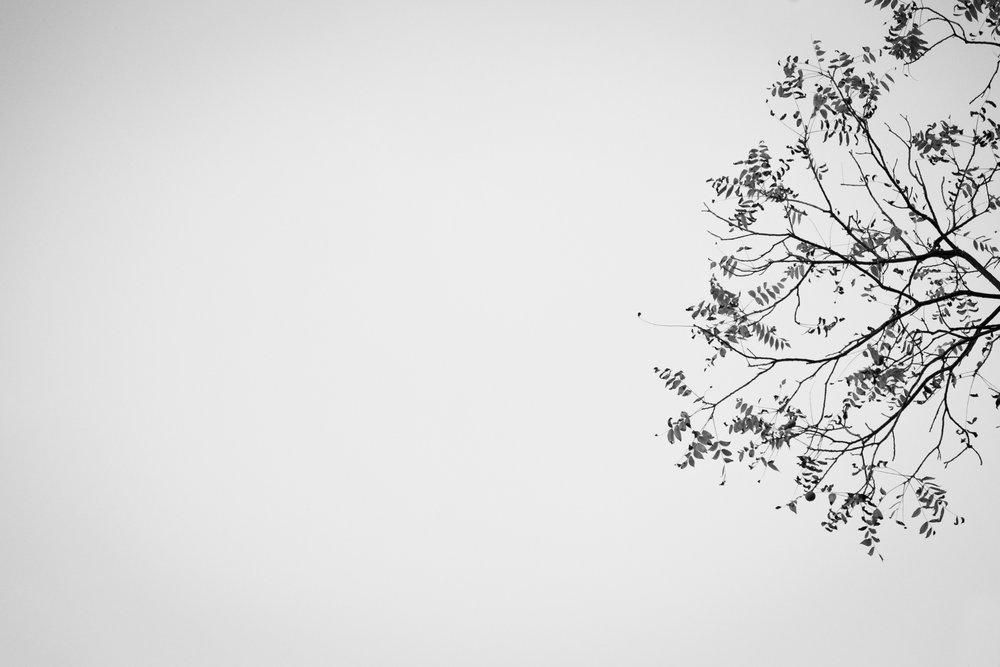 278 // 366 Walnut minimalism