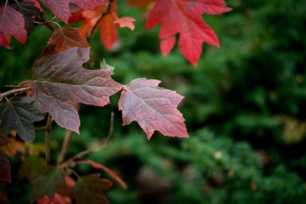 321 // 366 Fall campus scenes