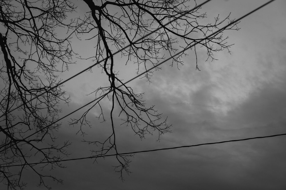 52 // 365 Another gloomy winter day