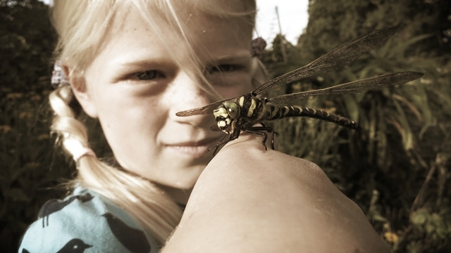 girl and dragonfly.jpg
