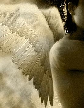 Gold wings angel.jpg