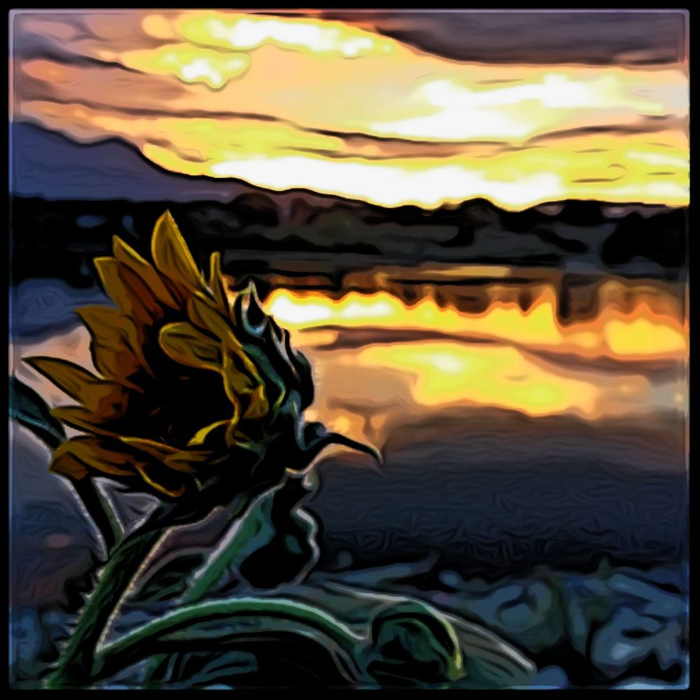 The Unobservant Sunflower.jpg