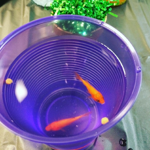Butch and Sundance hanging out in a party cup.  I was half afraid I was going to accidentally drink them.