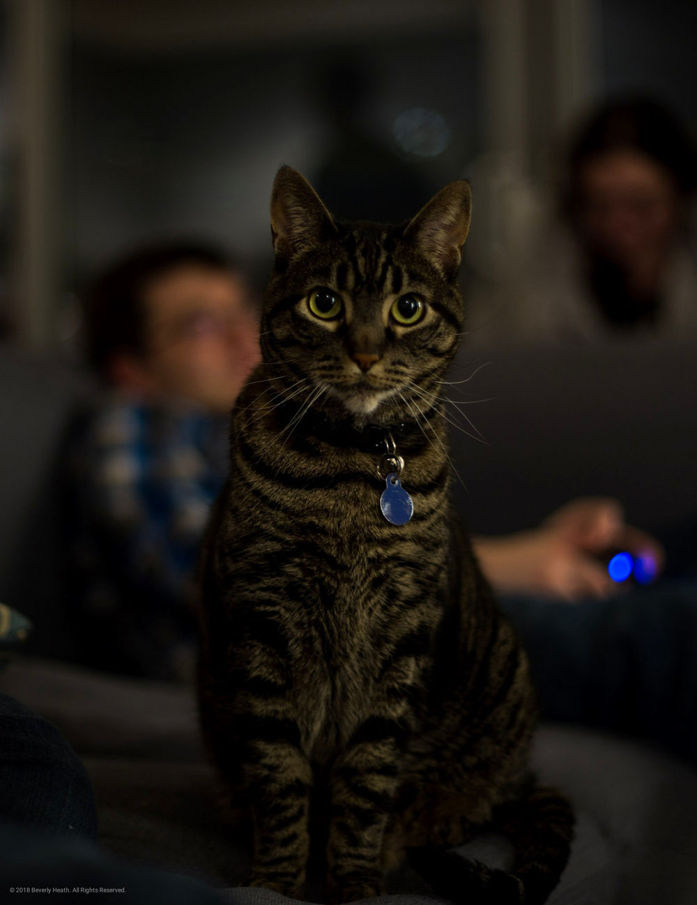 This cat is so handsome.