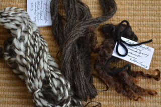 Black English Leicester lamb - (l-r) woollen spun yarn (white is English Leicester plied with black Wensleyday), worsted spun yarn, washed raw fleece.