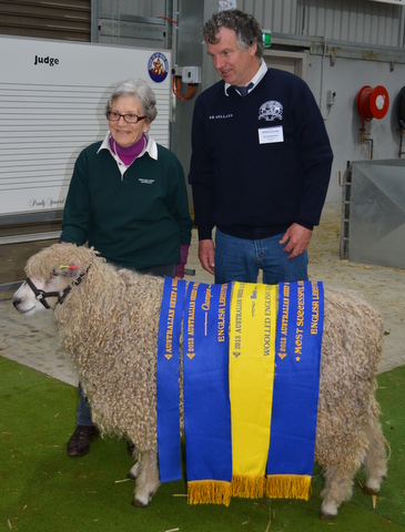 """Nugget"" showing off his ribbons at 2013 Australian Sheep and Wool Show while Ethel, his owner, and Nick, the judge and also English Leicester breeder, pose for picture"