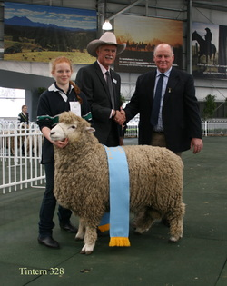 "Tintern 328 Champion Romney ram at Melbourne 2014.   Amy (holding ram) Gavin Wall and judge, Hugh Taylor ""Doughboy"" stud New Zealand."