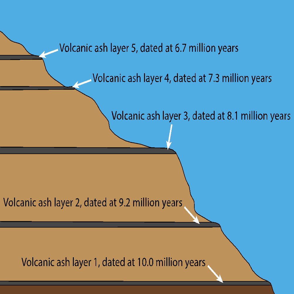 Fig. 2: A hypothetical outcrop, very similar to many I've studied, showing the consistency of the dates we get back from the laboratory.