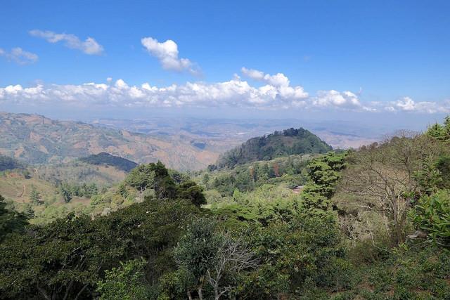 Coffee: Finca El Tambor, Guatemala