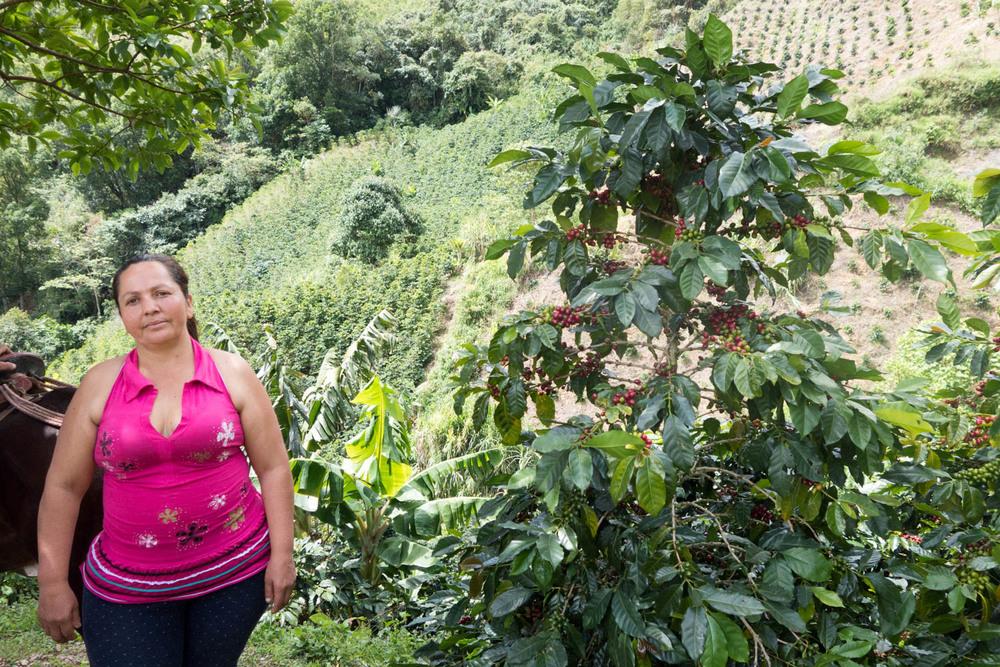 Marisol Bolanos standing next to her Colombia F6 varietal. Caturra varietal is on the mountainside behind.