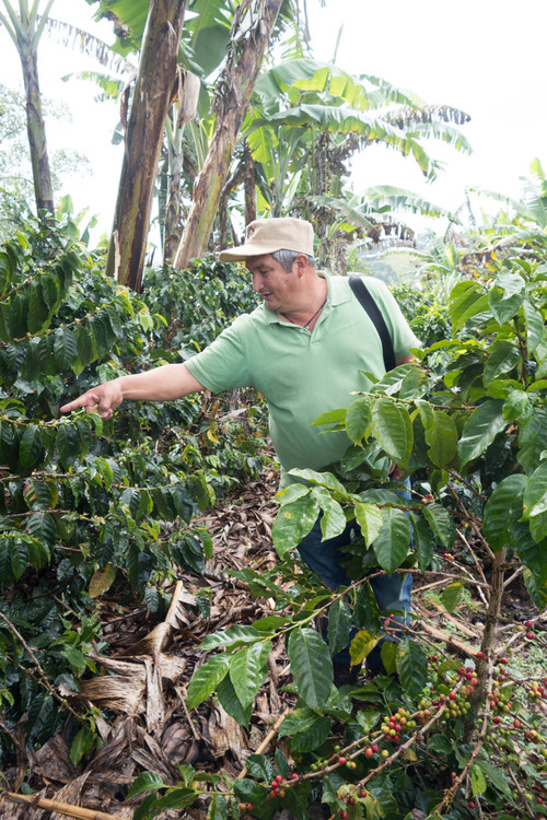 Carlos Trujillo and his Castillo Tambo coffee