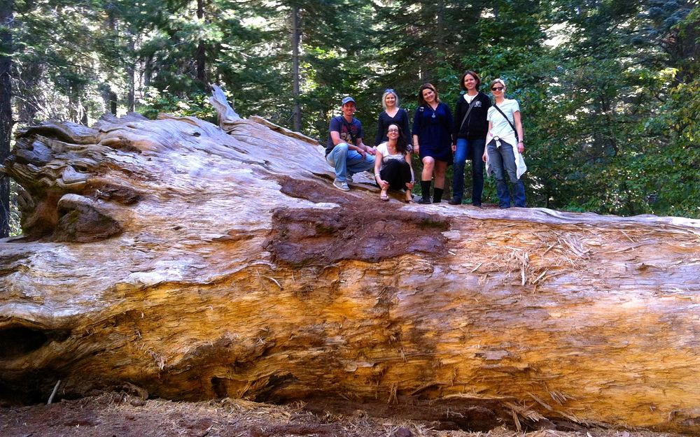 Unsere Gruppe im Yosemite Nationalpark.