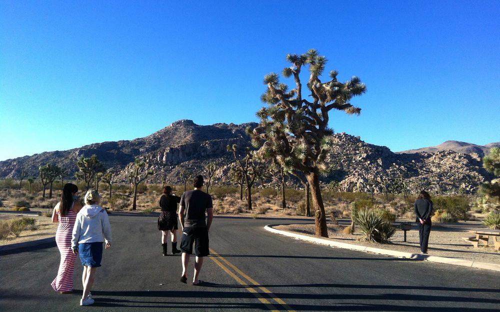 Im Joshua Tree Park, Zwischenhalt auf dem Weg nach Los Angeles.