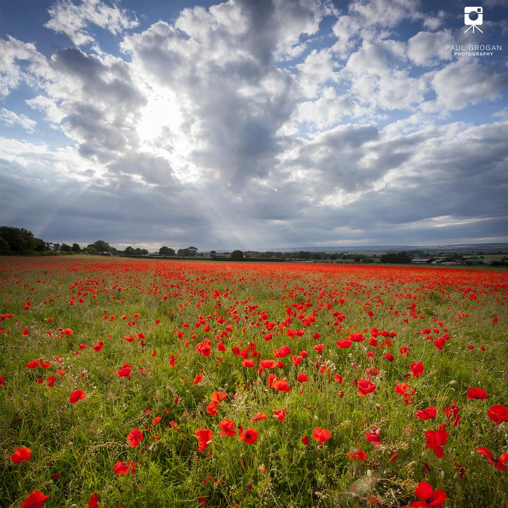 Poppy-field-Yorkshire-Landscape.jpg