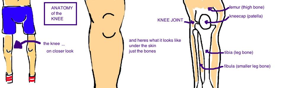 Broken Knee Tibial Plateau Fracture Bone Talks
