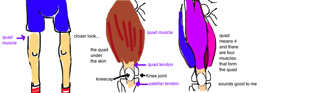 quad muscle tear patellar tear