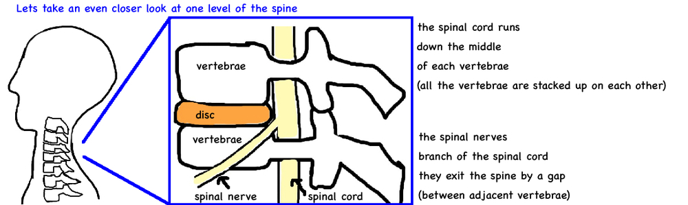 cervical myelopathy spinal cord injury in neck anatomy 2