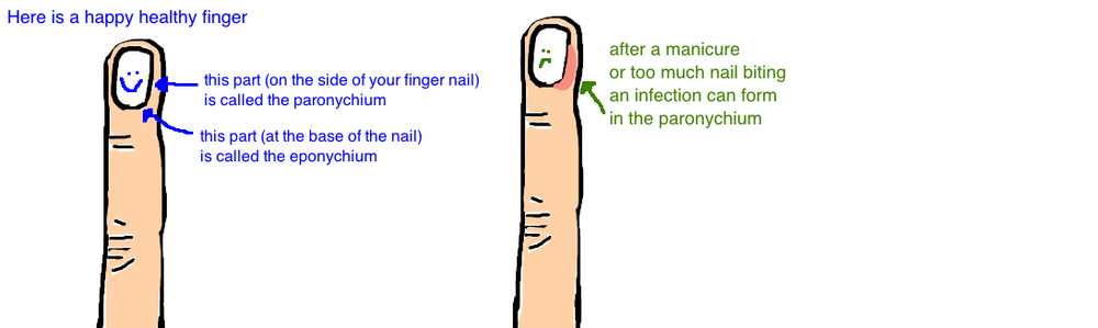 The Area Of Skin On Side Nail Is Called Parinychium While Covering Base Eponychium This Part