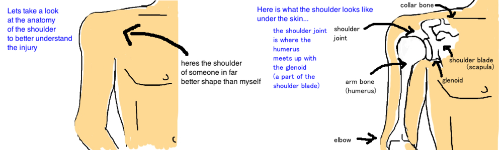 proximal humerus broken shoulder anatomy