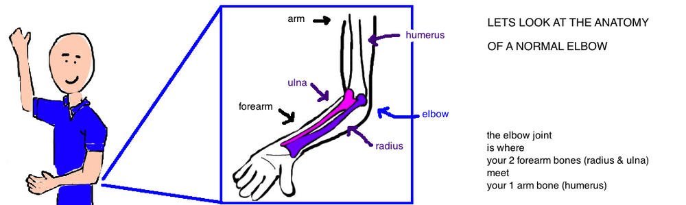 radial head anatomy anatomy of the elbow radial head joins capitellum