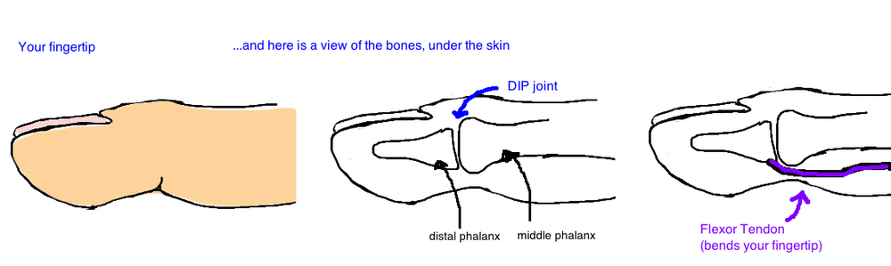 anatomy of flexor digitorum profundus fdp anatomy jersey finger
