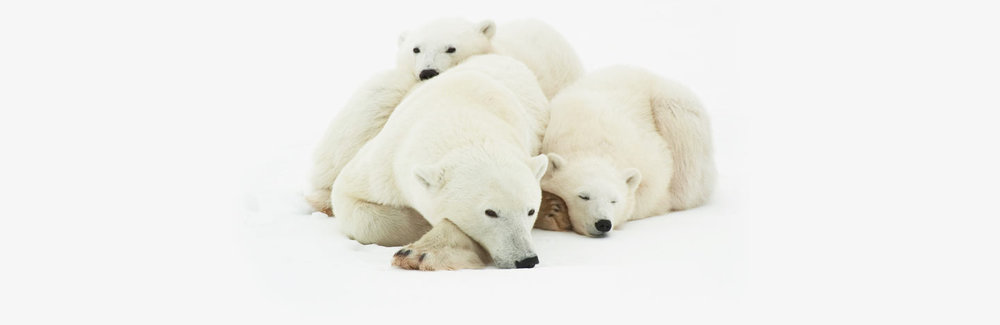 polar-bear-picture.jpg