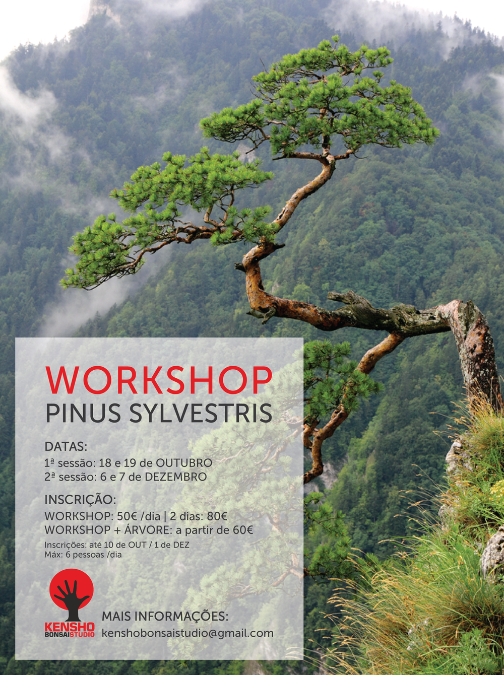 workshop-pinus.png