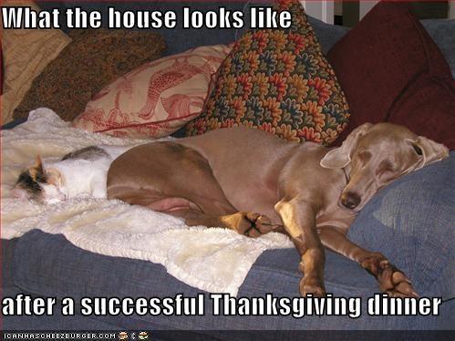 loldog_thanksgiving.jpg