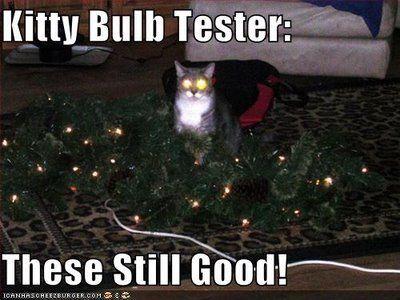 lolcats_kittybulbtester.jpg
