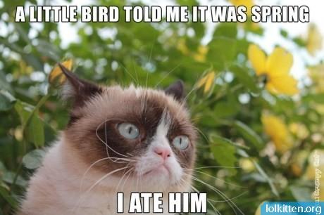 lolgrumpycat_spring.jpg
