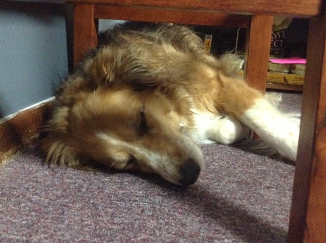 """Taffy says, """"Wake me up when it's all on the shelves!!"""""""