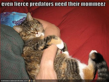 lolcat_mother'sday2014-4.jpg