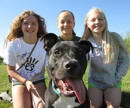 This year at Kids 'n Critters Camp Chato was a kids favorite.  They taught him so much and he was a stellar student!  He was easy to train and eager to please.  Chato is a young male pit bull mix that is looking for a forever home today so stop by HAWS today to meet this obedience superstar!