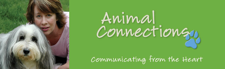 """Animals are more than just our companions. They can be our teachers. We should always show them gratitude and respect. And if we can learn to live as they do—from the heart—the world can experience true peace and serenity.""  www.animal-connections.com"
