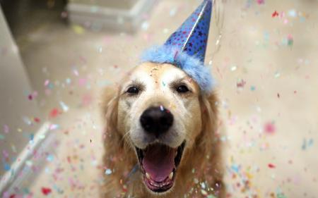 happynewyeardog.jpg