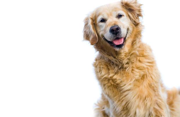 seniordog2.jpg