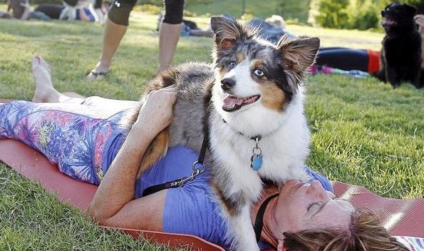 dog-yoga-park.jpg